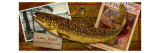 Lake Trout Giclee Print by Kate Ward Thacker
