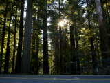 Highway Passing Through Redwood Forest, Route 101, Del Norte Coast Redwoods State Park, California Photographic Print