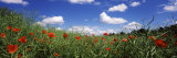 Red Poppies Blooming in a Field, Baden-Wurttemberg, Germany Photographic Print by  Panoramic Images