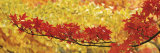 Red and Yellow Autumnal Leaves Fotografie-Druck von Panoramic Images