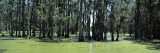 Trees in Swamp, Magnolia Plantation and Gardens, Charleston, Charleston County, South Carolina, USA Photographic Print by  Panoramic Images