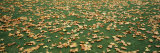 Leaves Fallen in a Park, London, England Photographic Print by  Panoramic Images