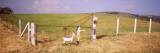 Cut Out Signs for a Goat Farm, California, USA Photographic Print by  Panoramic Images