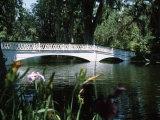 Bridge across a Swamp, Magnolia Plantation and Gardens, Charleston County, South Carolina Photographic Print