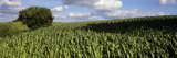 Crop in a Field, Brittany, France Photographic Print by  Panoramic Images