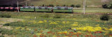 Oilseed Rape in the Field, Sangzor, Uzbekistan Photographic Print by  Panoramic Images