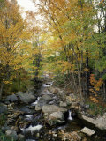 Stream Flowing in a Forest, Vermont, USA Photographic Print