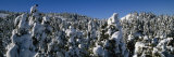 Snow Covered Fir and Larch Trees on a Landscape, French Riviera, Provence-Alpes-Cote D'Azur, France Photographic Print by  Panoramic Images