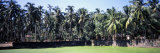 Palm Trees in an Elephant Sanctuary, Punnathurkotta, Guruvayur, Kerala, India Photographic Print by  Panoramic Images