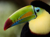 Close-Up of Keel-Billed Toucan, Costa Rica Photographic Print