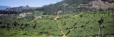 Tea Plantation, Coonoor, Nilgiris, Kerala, India Photographic Print by  Panoramic Images