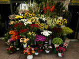 Flowers for Sale Outside Metro Station, Syntagma Square, Vassilissis Sofias Avenue, Athens, Greece Photographie