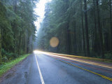 Us Route 101, Jedediah Smith Redwoods State Park, Crescent City, Del Norte County, California, USA Photographic Print