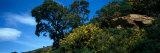 Tree on a Hill, Aiguamolls De L'Emporda Natural Park, Gerona, Catalonia, Spain Photographic Print by  Panoramic Images