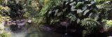Stream Passing Through a Tropical Rainforest, Guadeloupe Photographic Print by  Panoramic Images