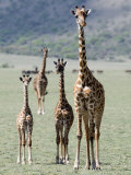 Giraffes Standing in a Forest, Lake Manyara, Tanzania Photographic Print