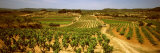 Vineyard, Bot, Terra Alta, Tarragona Province, Catalonia, Spain Photographic Print by  Panoramic Images