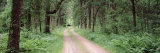 Dirt Road Passing Through a Forest, Sandhill Wildlife Area, Babcock, Wisconsin, USA Photographic Print by  Panoramic Images