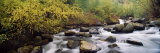 River Passing Through a Forest, Inyo County, California, USA Photographic Print by  Panoramic Images