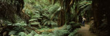Woman Standing in a Forest, Temperate Rainforest, Tarra-Bulga National Park, Victoria, Australia Photographic Print by  Panoramic Images