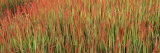 Red Baron in a Field Photographic Print by  Panoramic Images