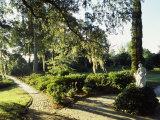 Statue in a Garden, Middleton Place, Charleston, Charleston County, South Carolina, USA Photographic Print