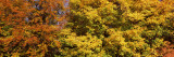 Autumnal Trees in a Park, Ludwigsburg Park, Ludwigsburg, Baden-Wurttemberg, Germany Photographic Print by  Panoramic Images