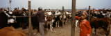 Cattle for Sale in a Market, Kashgar, Xinjiang Province, China Photographic Print by Panoramic Images 
