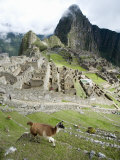 View of Llama with Incan Ruins in the Background, Machu Picchu, Peru Photographie