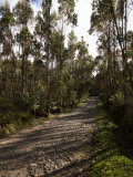 Road Passing Through a Forest, Otavalo, Imbabura Province, Ecuador Photographic Print