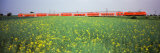 Commuter Train Passing Through Oilseed Rape Fields, Baden-Wurttemberg, Germany Photographie par Panoramic Images