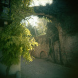 Archway Covered with Ivies, Neive, Cuneo Province, Piedmont, Italy Photographic Print