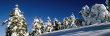 Snow Covered Fir and Larch Trees on a Landscape, French Riviera, Provence-Alpes-Cote D&#39;Azur, France Fotografie-Druck von Panoramic Images 