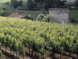 Vineyard Along a Farmhouse, Chateau La Clotte, Bordeaux, France Photographic Print