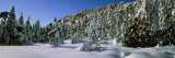 Fir Trees on a Snow Covered Landscape, French Riviera, Provence-Alpes-Cote D&#39;Azur, France Fotografie-Druck von Panoramic Images 