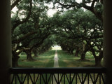 Oak Trees in Front of a Mansion, Oak Alley Plantation, Vacherie, Louisiana, USA Fotografiskt tryck