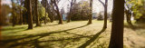 Trees in a Park, Volunteer Park, Capitol Hill, Seattle, Washington State, USA Photographic Print by  Panoramic Images