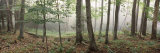 Trees in a Forest, Old Forge, Adirondack Mountains, Herkimer County, New York State, USA Photographic Print by  Panoramic Images