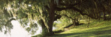 Garden at the Riverside, Middleton Place, Charleston, Charleston County, South Carolina, USA Photographic Print by  Panoramic Images