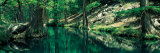 Stream in a Forest, Honey Creek, Texas, USA Photographic Print by  Panoramic Images