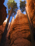 Utah, Bryce Canyon National Park, Douglas Fir Trees in Slot Canyon, USA Lámina fotográfica por John Warburton-lee