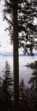 Trees at the Seaside, Teddy Bear Cove, Chuckanut Bay, Skagit County, Washington State, USA Photographic Print by  Panoramic Images