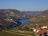 Douro Valley, Pinhao, Quinta Nova De Nossa Senhora Do Carmo Estate - First Wine Hotel in Portugal Photographic Print by Camilla Watson