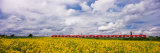 Commuter Train Passing Through Oilseed Rape Fields, Baden-Wurttemberg, Germany Photographic Print by Panoramic Images