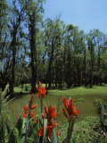 Trees in Swamp, Magnolia Plantation and Gardens, Charleston, Charleston County, South Carolina, USA Photographic Print