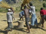 Group of Men Threshing Rice Near Ambalavao, Madagascar, Photographic Print
