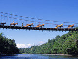 Mule Train Crossing a Bridge over the Rio Upano, Moreno Santiago Province, Ecuador, Photographic Print
