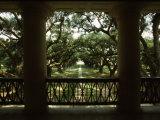 Oak Trees in Front of a Mansion, Oak Alley Plantation, Vacherie, Louisiana, USA Reprodukcja zdjęcia