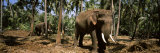 Indian Elephants in a Sanctuary, Punnathurkotta, Guruvayur, Kerala, India Photographic Print by  Panoramic Images