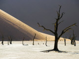 Blackened Camelthorn Trees in Dead Vlei, Near Sossusvlei, Namibia Photographic Print by Julian Love